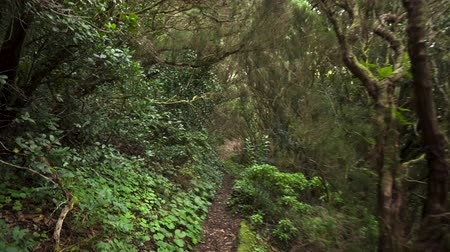 kanarya : Rainforest jungle path. Rainforest in anaga mountains, Tenerife, Canary islands, Spain.