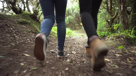 Low angle view, following two hikers walking in the woods.