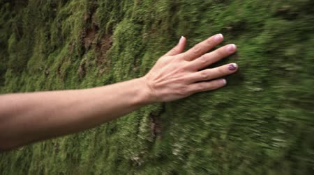 Woman hand touching softly the moss on the wall in the tropical rainforest. Dostupné videozáznamy