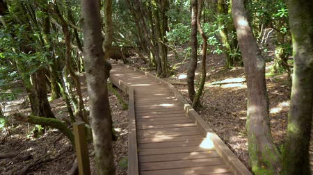 babér : wodden path in rainforest landscape in anaga mountains, Tenerife, Canary islands, Spain.