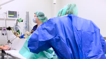 roucho : Panning shot of Veterinarian surgical team operating a dog at animal hospital.