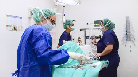 scalpel : Veterinarian surgical team operating a dog at animal hospital. Stock Footage