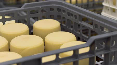 rodas : Cheese arranged in boxes at cheese factory warehouse. Stock Footage
