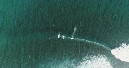longboard : Top down aerial shot on surfers catching waves at the ocean. Bird eye view high on seawater with surfing board at the pacific