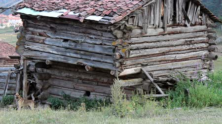 abandoned old : Anatolian old shack villager house in the forest  Stock Footage