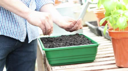 front or back yard : Close Up Of Man In Greehouse Planting Seeds In Tray In Slow Motion Stock Footage