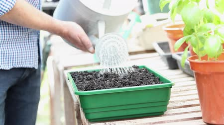 front or back yard : Close Up Of Man In Greehouse Watering Seeds In Tray With Watering Can Stock Footage