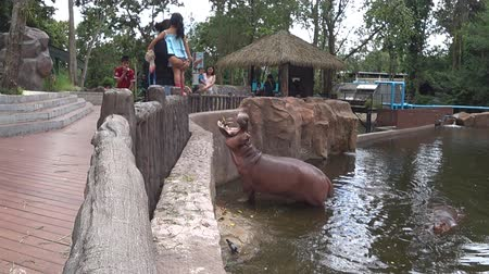 Chiang Mai, Thailand - July 1, 2018 :  At Chiang Mai Zoo, The hippopotamus get some food from tourist.