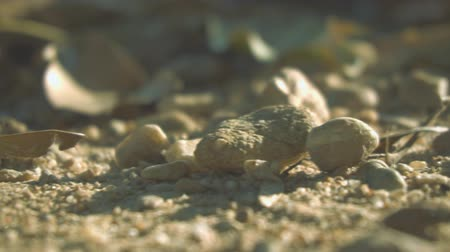Close-up of gravel, grit, stone, sand on ground.
