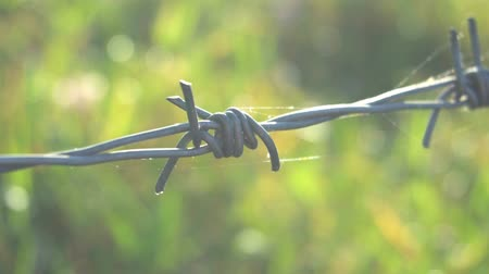 farpado : Close-up barbed wire.
