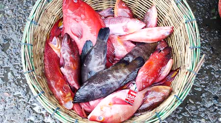 Fresh colorful Tropical fish on basket for sale at Seafood Market