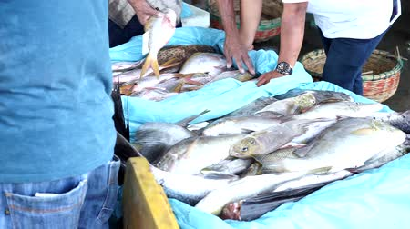 Packaging Fresh Fish in Box with Ice at Seafood Market Wideo