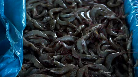 pronto a comer : Fresh sea Shrimp for sale in Traditional Seafood market