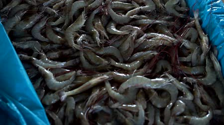 готовые к употреблению : Fresh sea Shrimp for sale in Traditional Seafood market