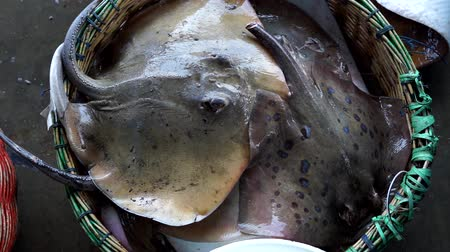 temas animais : Fresh marine stingray for sale at Traditional Seafood market Vídeos