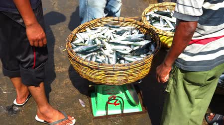 makrela : Fresh Sardines for sale at Traditional Fish Market