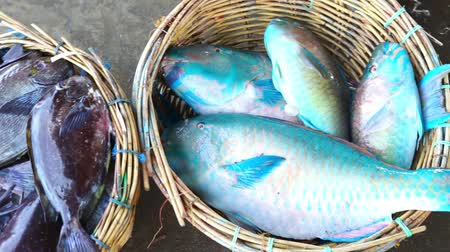 готовые к употреблению : Fresh Blue Parrot fish at Traditional Fish Market