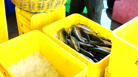 makrela : Fish Vendor Packaging Sardines with ice and Box - Container,