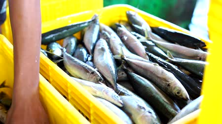 скумбрия : Fish Vendor Packaging Sardines with ice and Box - Container,