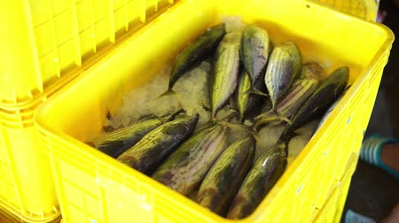 omega : Fish Vendor Packaging Skipjack Tuna with ice and Box - Container