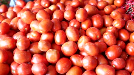 tomate cereja : Fresh Red tomatoes vegetables from farm