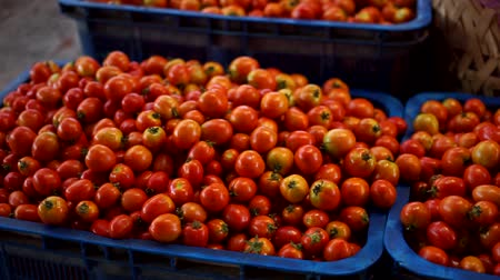 antioksidan : Group of red tomatoes in tray village market agriculture farm