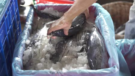 tail fin : Vendor selling fresh baby Tuna Fish at traditional fish market Indonesia Stock Footage