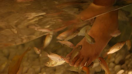 garra : foot peeling fish close-up