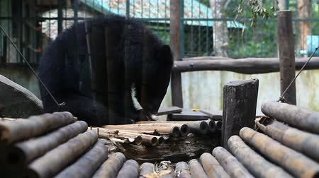 Himalayan bears in the zoo