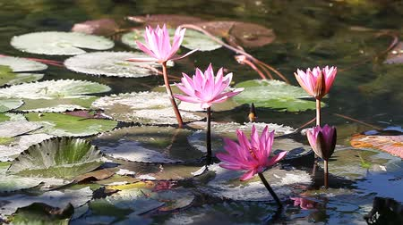 Lotus - a sacred flower in Buddhism. Personalizes purity and harmony