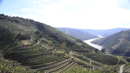 údolí : terraced vineyards in Douro Valley, Alto Douro Wine Region in northern Portugal, officially designated by UNESCO as World Heritage Site