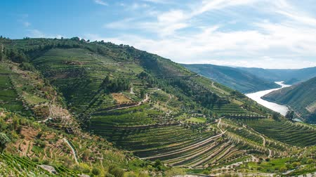 údolí : Timelapse of terraced vineyards in Douro Valley, Alto Douro Wine Region in northern Portugal, officially designated by UNESCO as World Heritage Site
