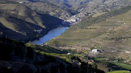 dünya mirası : Tilt move from bottom to top of terraced vineyards in Douro Valley, Alto Douro Wine Region in northern Portugal, officially designated by UNESCO as World Heritage Site