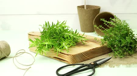 laur : Bunches of rosemary and thyme with oldfashioned scissors. Wood table background.