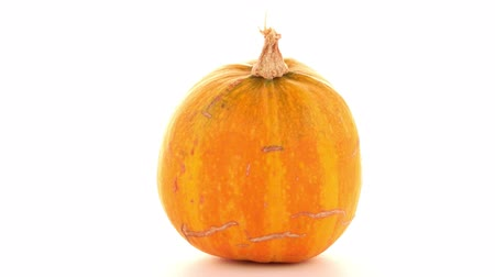 dynia : Pumpkin isolated on white background Wideo