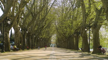 lima : PONTE DE LIMA, PORTUGAL - CIRCA APRIL 2018:  Tree lined walk along the Lima River at Alameda dos Platanos.