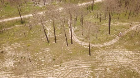 adrenalin : Aerial drone shot view of one enduro motorcycle drive through path or sandy trail on pine trees field during off road training in countryside. Adrenaline rush fun. Dostupné videozáznamy
