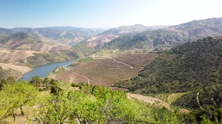 регионы : Viewpoint of Vargelas allows to see a vast landscape on the Douro and its man-made slopes. Douro Region, famous Port Wine Region, Portugal. Стоковые видеозаписи
