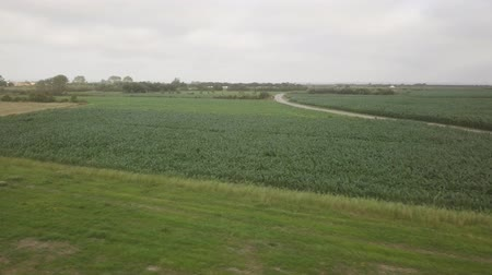 mais : Aerial  view of a corn field on a cloudy day. Stockvideo