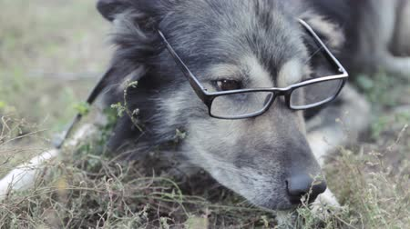 sassy : old wise dog in glasses, violence against animals