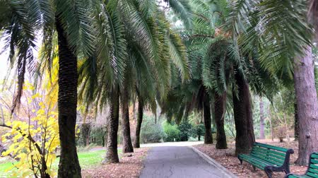 wood glade : A walk in the Park, autumn landscape, palm trees and cypresses Stock Footage