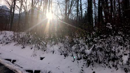 The sun shines through the trees winter snow forest
