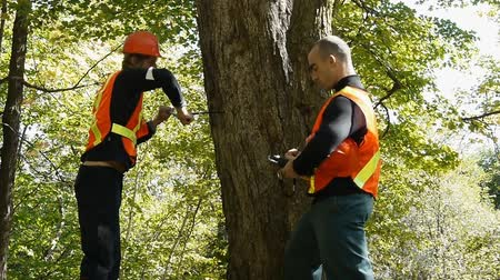 kask : Environment workers taking a wood sample out of a tree trunk Stok Video