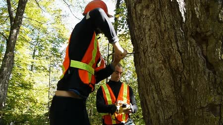 analisar : Two Environment workers looking taking samples out of a tree trunk