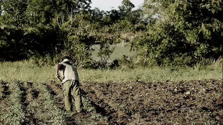 striving : Farmer working on his field Stock Footage