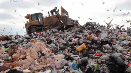 fogyaszt : Truck moving trash in landfill with birds looking for food