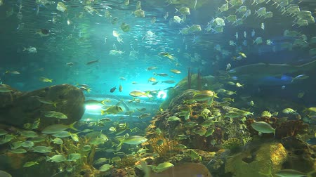 biodiverzitás : Huge schools of tropical fish swim with sharks in a coral reef