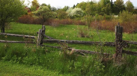 margarida : A quiet meadow with a rustic cedar fence in the foreground