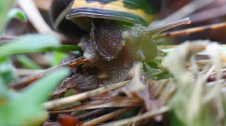 salyangoz : A colorful snail moves up a stem