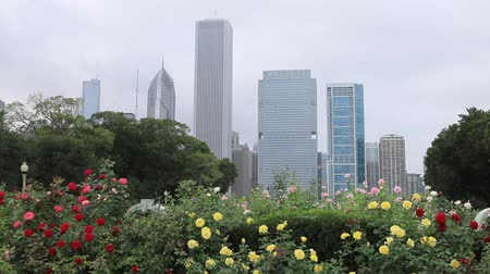 západ : Chicago skyline with flowers in foreground
